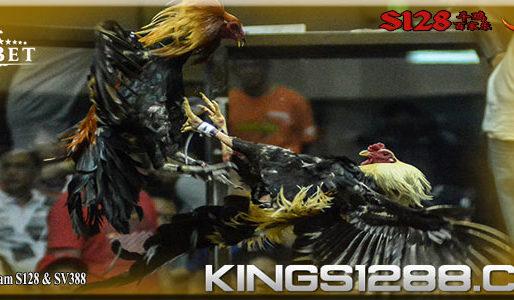 Adu Ayam Terbaik S128 Dan SV388 Agen Terpercaya