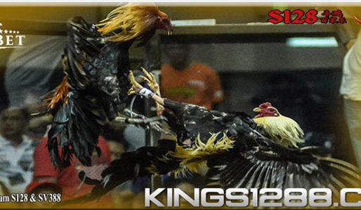 Agen S1288 Penyedia Permainan Sabung Ayam Online Uptodate