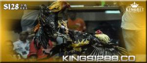 S128- Trik Mudah Merawat Ayam Aduan Jantan Menajadi Juara