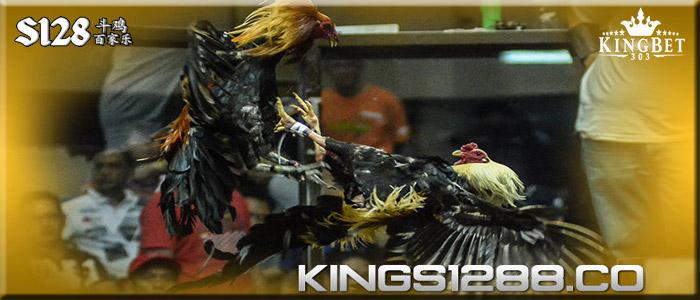 S1288 Sabung Ayam, Situs Tarung Ayam Jago Online Terpercaya