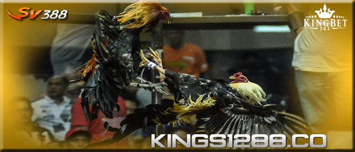 Sabung Ayam Sv388, Permainan Adu ayam Online