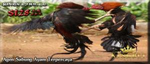 Situs Adu Ayam S128 Online Terpercaya
