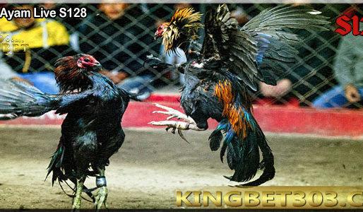 Adu Ayam Live S128 Permainan Favorit Semua Orang
