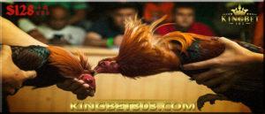 Daftar S128 Sabung Ayam Online, Bagaimana Caranya?