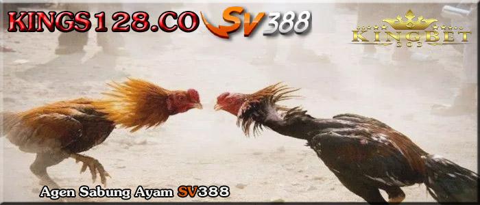 Daftar Sv388 Agen Terpercaya Kings128.co