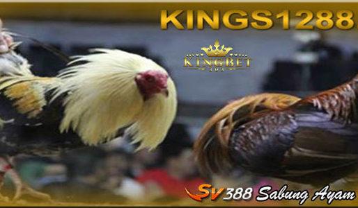 Judi Sv388 Permainan Adu Ayam Online Uang Asli