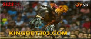 Promo Sabung Ayam Terpercaya S128 Dan SV388