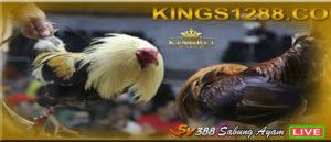 Sabung Ayam Live Streaming Situs SV388