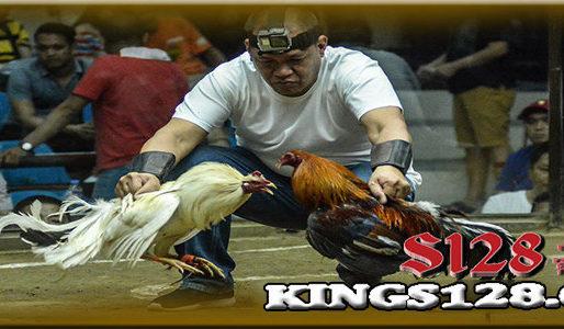 Sabung Ayam Online Ajang Permainan Situs S128 Terbaik