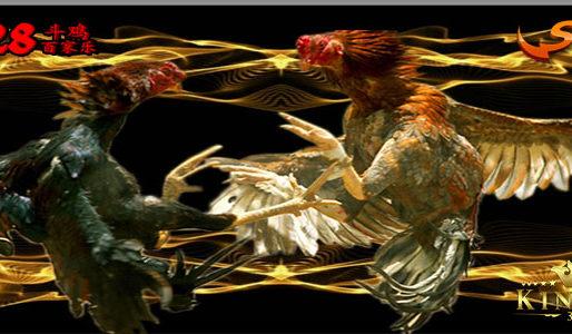 Sabung Ayam Online S128 Dan Sv388