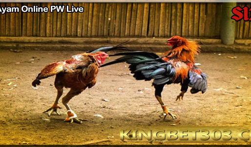 Sabung Ayam Pw Permainan Tarung Ayam Online S128