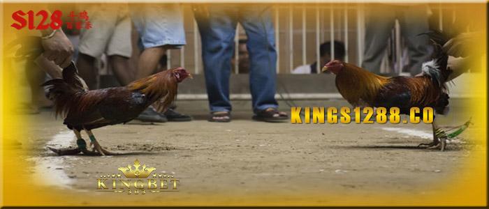 Sabung Ayam Terbaik Dengan Pilihan Agen Terbaik