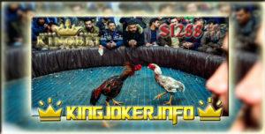 Agen Sabung Ayam Online Arena Laga Ayam Live S1288, Keren Habis!