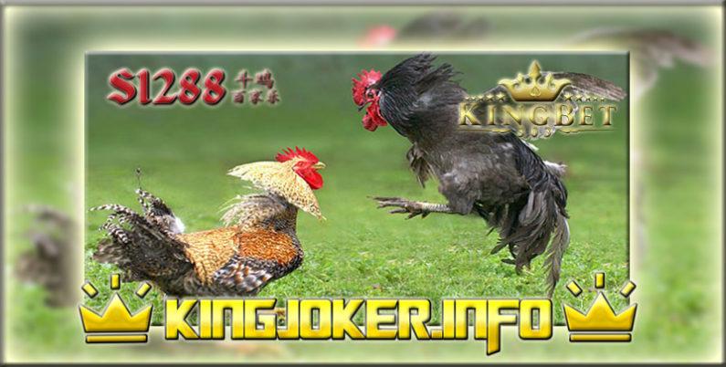 Agen Sabung Ayam S1288 Tempat Beradu Paling Ramai!