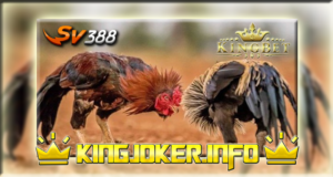 Agen Sabung Ayam Sv388 LIVE Terbaik Di Asia, Yakin Lewati?
