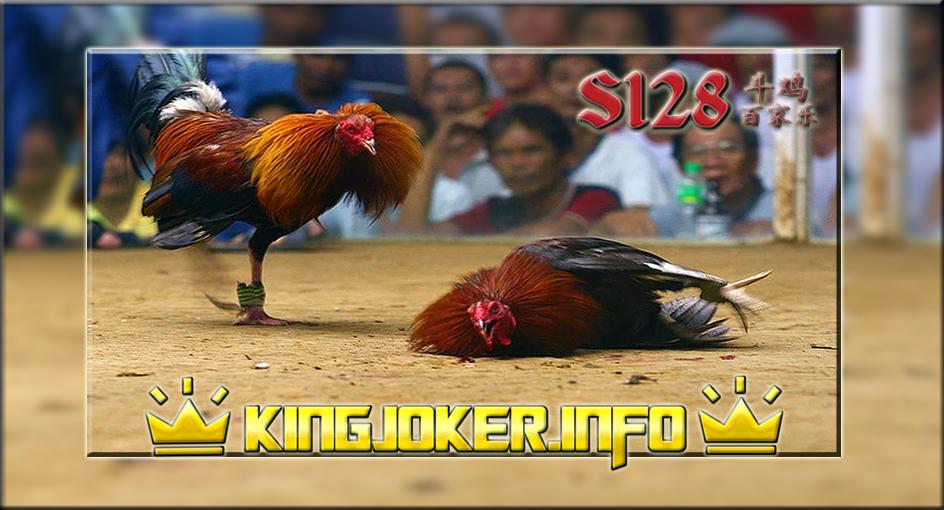 S128 Adu Ayam Live Jadi Kemudahan Dalam Bertaruh, Di Sini!