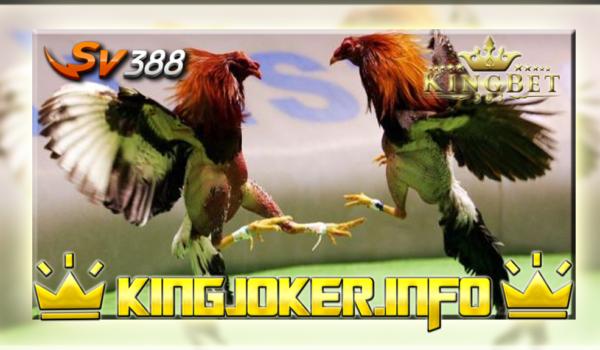 Sabung Ayam Terbesar Sv388 Indonesia, Nyaman Untuk Di Tonton!