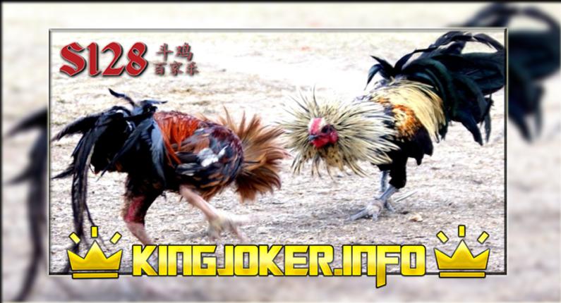 Tempat Adu Ayam Online Terbaik S128, Biki Geleng Kepala!