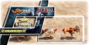 S1288 Sabung Ayam Terbaik Nonton Adu Ayam Jago Jadi Mudah