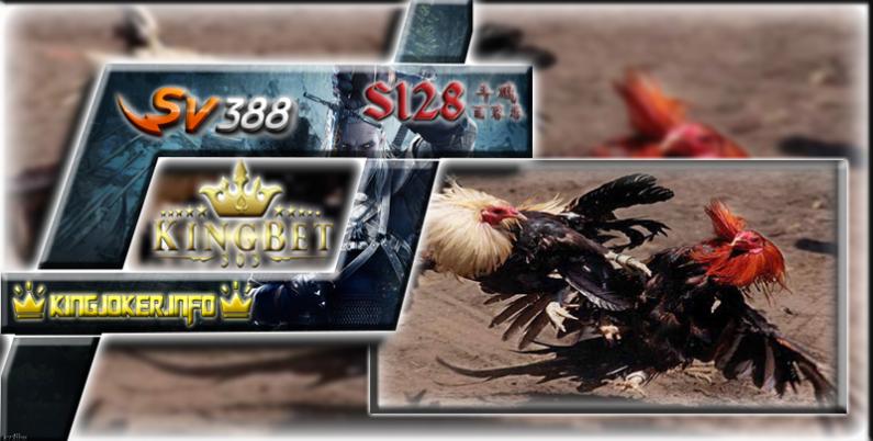 Sabung Ayam Live Sv388 Sarana Permainan Laga Ayam Terbaik