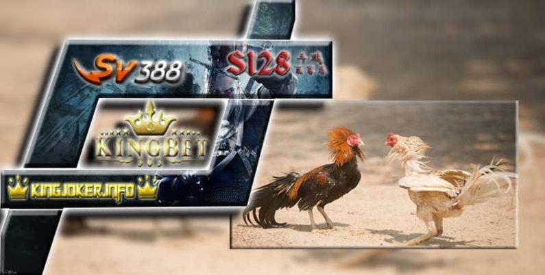 Situs Judi SV388 Menang Banyak Uang Asli Dengan Ayam Juara