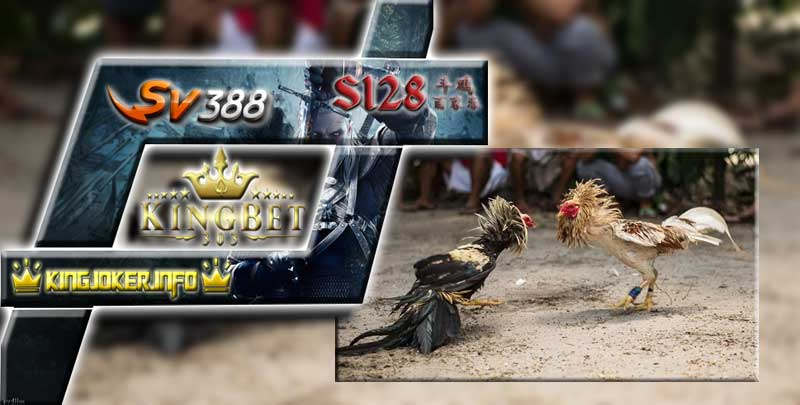 Sv388 Sabung Ayam Agen Terpercaya Dan Teraman Berjudi
