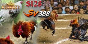 Laga Ayam Online