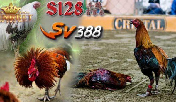 S128 Ayam Jago
