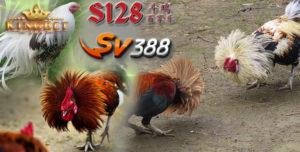 Arena S128 Online