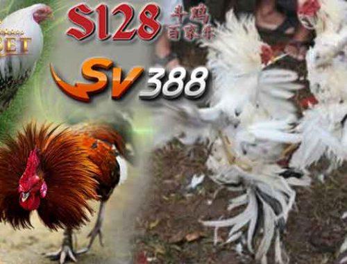 Live Sv388